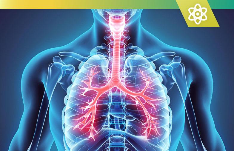 Top 10 des meilleurs suppléments de santé pulmonaire pour des bienfaits de la respiration naturelle en 2020